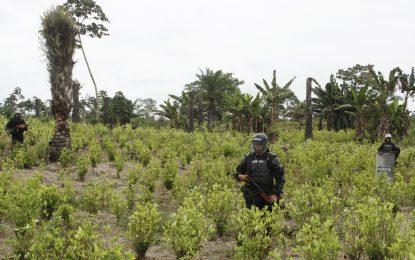 Los 10 municipios en los que se podría repetir la crisis de Tumaco