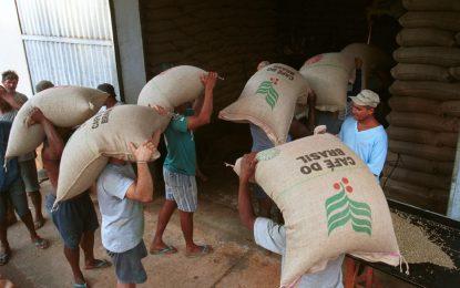 Cafeteros apuestan a retener el grano para elevar precio