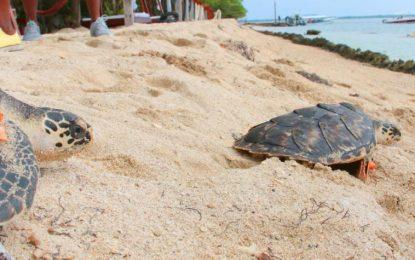 Tutelatón de nativos contra cierre de Playa Blanca, en Cartagena